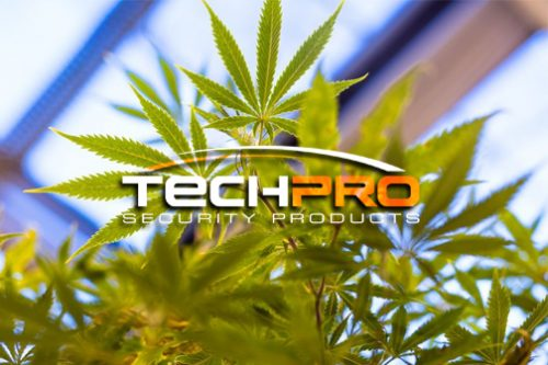Installing Security Cameras For Marijuana Dispensary Florida